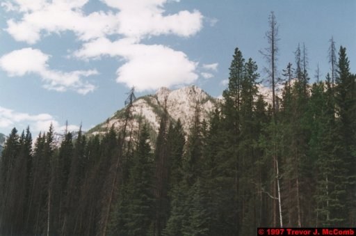 U.S.A.~Canada 541 ~ Alberta 042 ~ From Banff To Lake Louise 03