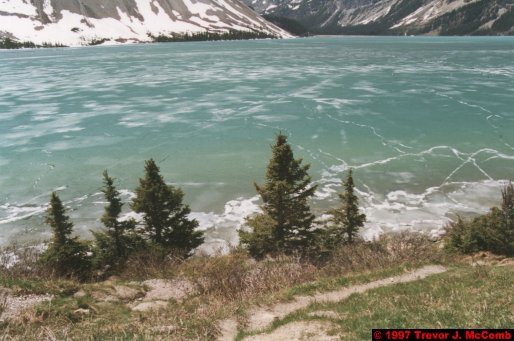 U.S.A.~Canada 618 ~ Alberta 119 ~ From Lake Louise To Athabasca Glacier 32 ~ Bow Lake 07