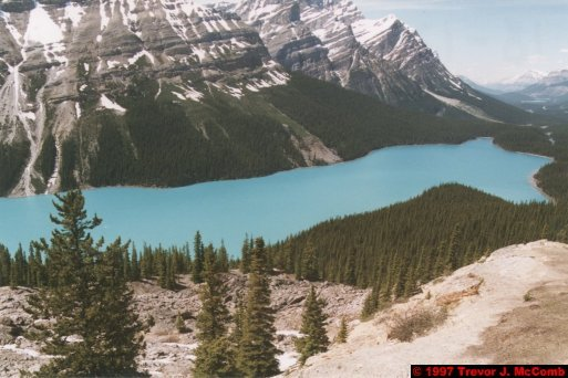 U.S.A.~Canada 636 ~ Alberta 137 ~ From Lake Louise To Athabasca Glacier 50 ~ Peyto Lake 05