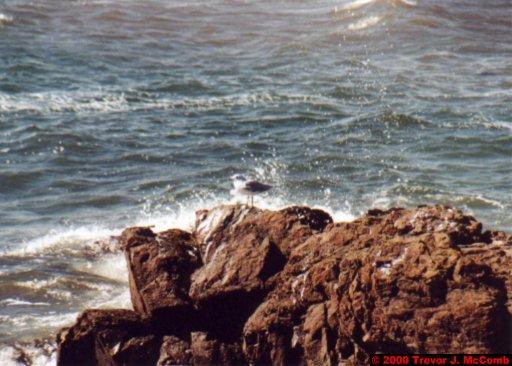 Canada~U.S.A. 320 ~ Maine 27 ~ Kennebunkport 26 ~ Sea Gul 5