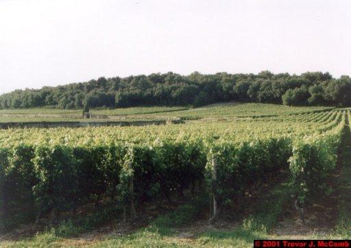 France 199 ~ Pays-de-la-Loire 118 ~ Chaintre 1 ~ Vineyard 1