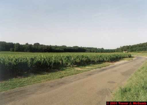 France 201 ~ Pays-de-la-Loire 120 ~ Chaintre 3 ~ Vineyard 3