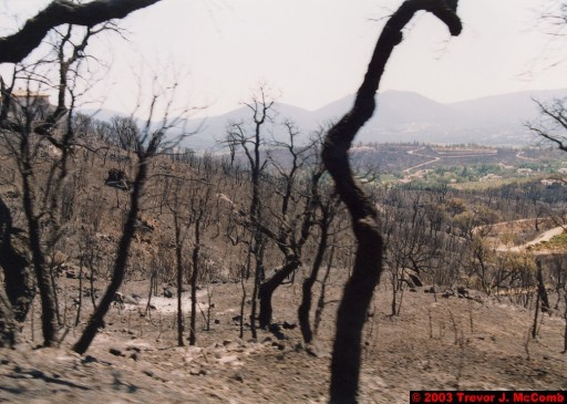 France 108 ~ Provence-Alpes-Côte d'Azur 100 ~ Var 066 ~ Burnt Vegetation 1