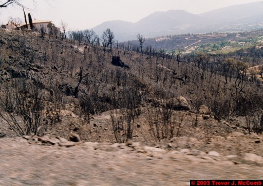 France 109 ~ Provence-Alpes-Côte d'Azur 101 ~ Var 067 ~ Burnt Vegetation 2